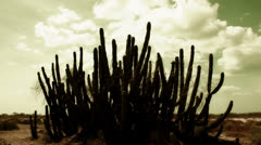 Cactus timelapse 02 Stock Footage