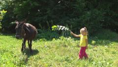Child, Little Girl Feeding Donkey with a Branch of Leaves, Children Love Animals Stock Footage