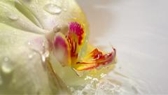 Water drops falling on yellow orchid flower, slow motion 79 Stock Footage