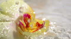 Water drops falling on yellow orchid flower, slow motion 80 Stock Footage
