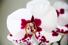Stock Photo of beautiful orchid