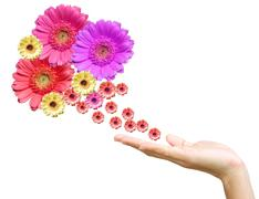 Woman's hand with flowers Stock Photos