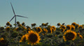 Wind Turbines in Agriculture Field, Windmill on Sunflower Land, Green Energy Footage