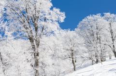 Snow and rime - stock photo