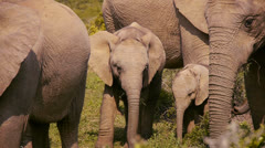 Two baby elephants Stock Footage