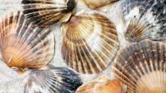 seashells - stock footage