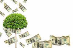 money tree. isolated over white - stock photo