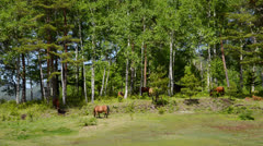 And horse ranch - stock footage