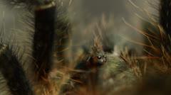 Red tarantula macro only eyes Stock Footage