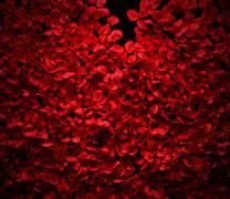 rose petals background - stock illustration