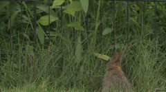 Rabbit stands eats and hops away Stock Footage