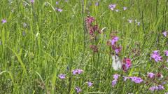 Butterflies on flower field in summer 12 - stock footage