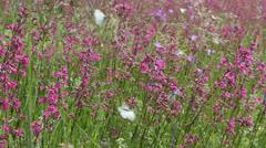 Butterflies on flower field in summer 10 - stock footage
