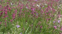 Butterflies on flower field in summer 8 - stock footage