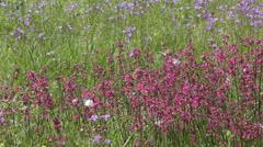 Butterflies on flower field in summer 9 Stock Footage