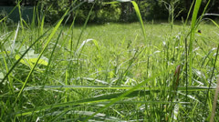 A lawn of grass. Through the eyes of a cat or a small insect Stock Footage