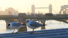 Couple of pigeon. View of the city at morning. Tower Bridge in the background 10 Stock Footage