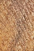 Medieval inscriptions on stone wall. sri lanka Stock Photos