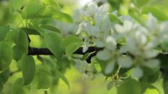 Bee in the garden Stock Footage