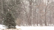 Stock Video Footage of Heavy Snowfall with Large Snowflakes.
