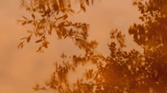 Branches of trees, leaves reflection in water Stock Footage