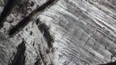 Wood carvings tilt up Stock Footage