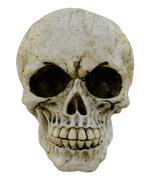 Stock Photo of human skull