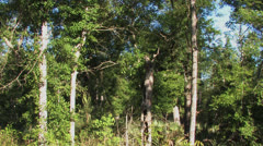 Trucking shot in the Big Thicket Stock Footage