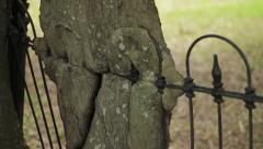 Tree grown through a wrought iron cemetery fence tilt up Stock Footage