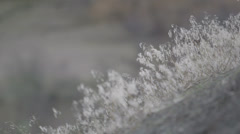 Closeup Hill Grasses Stock Footage