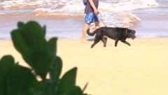 Leashed Dog at Beach Stock Footage