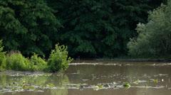 Swamp Vista 1 Swamp 5D3RawDNG 1920x1080 24p CBR 80mbps Stock Footage