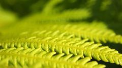 Stock Photo of fern