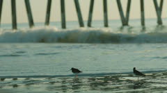 Birds play and woman walks through surf, handheld, 48fps Stock Footage
