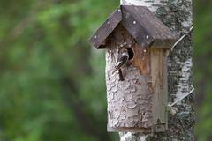 Käsintehdyt linnunpönttö ja pieni lintu Kuvituskuvat