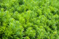 macro shot of green bush - stock photo
