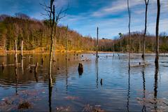 Evening light on a marshy area in calvert cliffs state park, along the chesap Stock Photos
