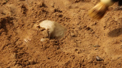 Skull in sand discovered Stock Footage