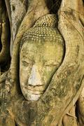 a buddha head inside a tree in ayudhaya - stock photo