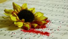 Blood drops to the yellow flowers and music papers Stock Footage
