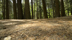 Yosemite LM68 Dolly Circular L Forest Stock Footage