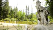 Yosemite LM69 Dolly Circular Back R Merced River Cathedral Beach Stock Footage