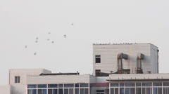 Doves flying over city Stock Footage