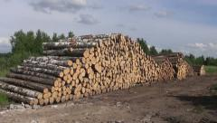 Large stack  cut birch and pine logs Stock Footage