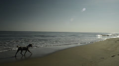 Slow Motion Dog Running by the Surf Stock Footage
