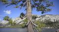 Yosemite LM85 Teneya Lake Circular Dolly L Footage