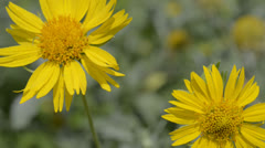 Yellow wildflowers Stock Footage