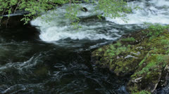 River in forest trees and moss Ketchikan Alaska HD 7533 Stock Footage