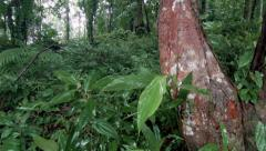 Rain forest plants Stock Footage