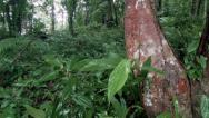 Stock Video Footage of Rain forest plants